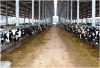Dairy and beef cattle purchase feasibility study